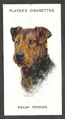 1929 UK Arthur Wardle Dog Art Head Study Player Cigarette Card WELSH TERRIER