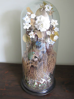 A Large 19th century Victorian taxidermy under Glass Dome
