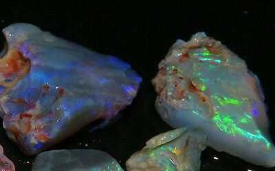 Opal Fossil Australian Lightning Ridge Beautiful color - 63,75 cts - 5 Pieces