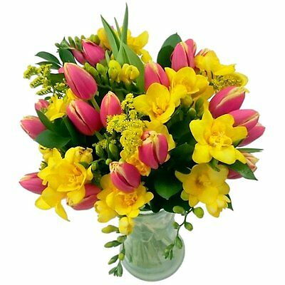 Clare Florist Tulip and Freesia Fresh Flower Bouquet