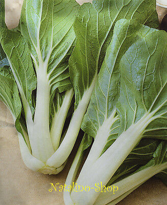 Pak Choi 100+ Seeds *Chinese Mustard *Spoon cabbage *Asian Vegetable seeds