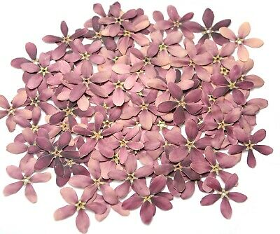 Beautiful Purple 5 Petals Pressed Flowers Cute Size DIY Floral Crafts 4CMX4CM