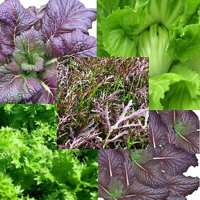 Asian mustard greens collection 5 Varieties value pack  5 individual packets