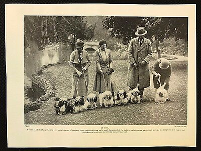 1934 Dog Print / Bookplate - LHASA APSO, Line up of Dogs awaiting Judge in 1933