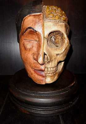 1950's VINTAGE DR AUZOUS STYLE ANATOMICAL WOODEN HALF SKULL HEAD