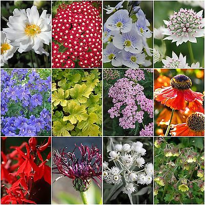 Complete Cottage Garden Perennial Plant Collection (12 plants in 9cm pots)
