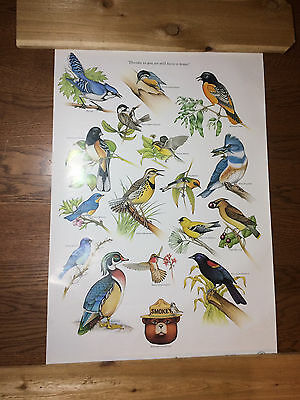 Smokey Bear VTG 1980 Poster US Dept Agriculture Song Bird ID 30X20
