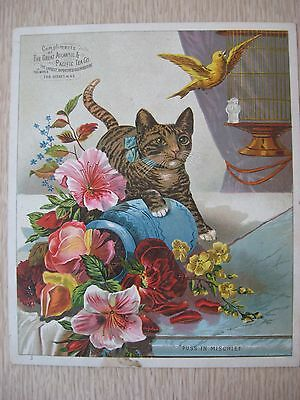 Antique Victorian Trade Card Color Litho Cat Canary  Atlantic & Pacific Tea Co