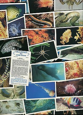 """Players Grandee 1985 Set Of 30 """"the Living Ocean"""" Cigarette Cards"""