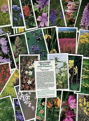 """Players Grandee 1986 Set Of 30 """"britain's Wild Flowers"""" Cigarette Cards"""