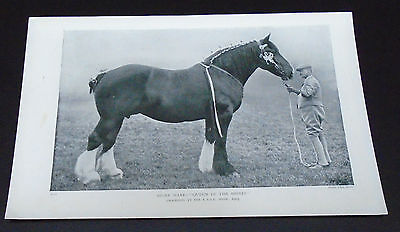 Old print Farming Horse Shire Mare