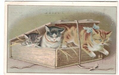 1890's Trade Card Springfield Massachusetts Kibbe Brothers Three Cats in a Box
