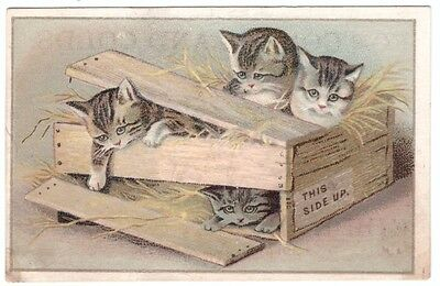 1890's Trade Card Springfield Massachusetts Kibbe Brothers Four Cats in a Box