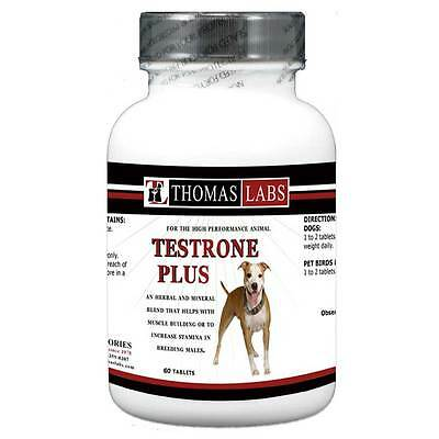 THOMAS LABS TESTRONE PLUS. Increases Stamina in Males for Dogs, Birds & Pigeons