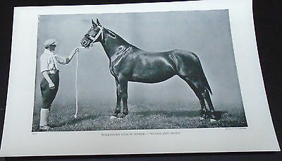 Old Print Yorkshire Coach Horse