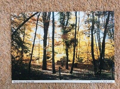 (R) Postcard . Beech trees on Titsey Hill, Surrey. Photograph by Keith Louis