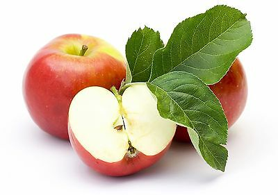 🍎Sweetest & Delicious Apple Tree 🍎15-Finest Seeds🍎Hardy Variety🍎UK  Seller🍎