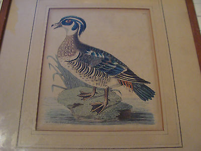 Vintage Original late 1700's Hand Colored BIRD PRINT in frame #2