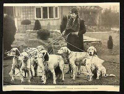 Original 1934 Dog Print / Bookplate - ENGLISH SETTERS, Mrs Eadington & her dogs