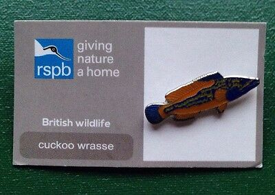 RSPB-British Wildlife CUCKOO WRASSE  Pin Badge.