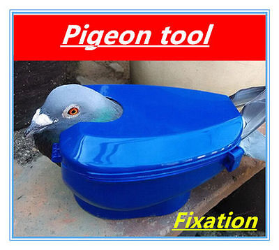 PIGEON HOLDER - Pigeon Tools Fixed box Feed for Racing Pigeons ..