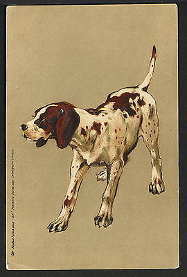 Pointer Dog Raphael Tuck Postcard Series 855 Circa 1903 Chromographed in Prussia