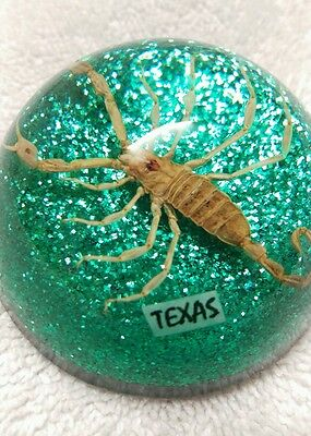 Scorpion In A  Acrylic Dome Paper Weight Texas Souvenir