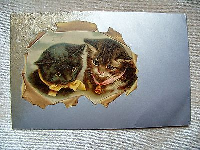 Old cat postcard by Helena Maguire? postally used 1909