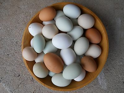 6 DOZEN NATURAL COLORED BLOWN CHICKEN EGGS MEDIUM to LARGE MIXED COLORS