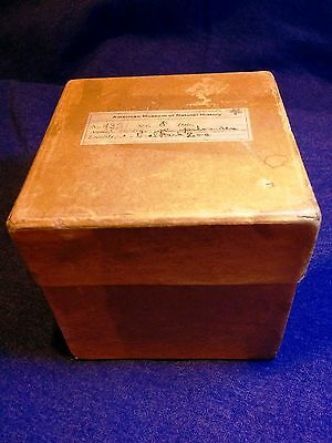 Antique SPECIMEN BOX Vintage Oddity Display - American Museum of Natural History
