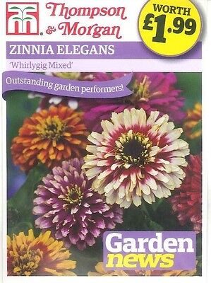 Zinnia Whirlygig Mixed Colourful Annual Seed Mix