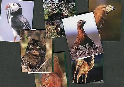 House Of Dorchester Lunch Tablet Chocolate Wrapper Set Of 7 Wildlife Cards