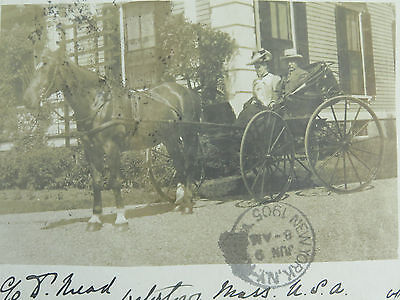 Antique Real Photo Postcard ~ Horse & Trap ~ Watertown New York 1905
