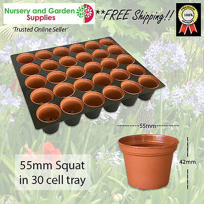55mm Squat Pot in 30 Cell Tray - **COMBO - Cactus, Succulents, Orchids