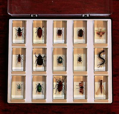 Resin Insect Collection   Taxidermy bugs real genuine authentic