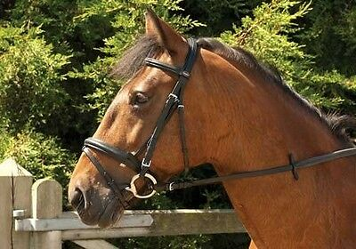 Windsor Leather 'Comfort' Bridle With Crank Style Flash  ALL SIZES