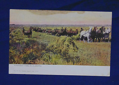 Early 1900's Unposted Canadian Postcard -- Draft Horses Harvest Alberta