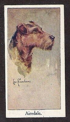 1924 UK Leo Chambers Dog Art Head Study Moustafa Cigarette Card AIREDALE TERRIER