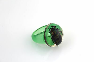 """Vintage Green Lucite Beetle Bug Iridescent Real Insect Ring Size 6 1/2"""""""