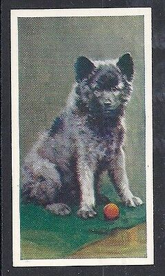 1939 Our Dogs Puppies Dog Art Godfrey Phillips Cigarette Card KEESHOND - Narrow