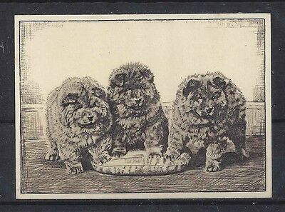 1938 UK Dog Art Photo Etching Ardath Cigarette Card Three Puppies CHOW CHOW Exc+