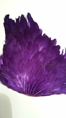 "India  Hen Saddle Patch     "" Purple  ""  Wet Hackle Fly Tying"