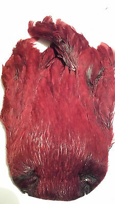 "India  Hen Cape     "" Wine ""  Wet Hackle Fly Tying"