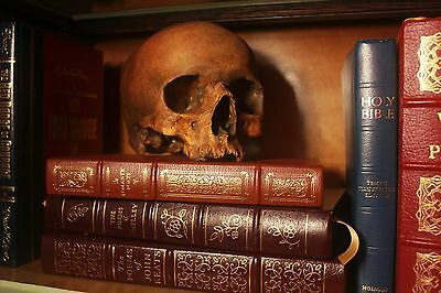 Human Skull Hamlet Anatomical Medical Skeleton Catacomb Tomb Grave Vampire Rare