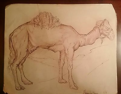 Antique drawing of a camel. XVI century probably. Ink on old laid paper. Signed