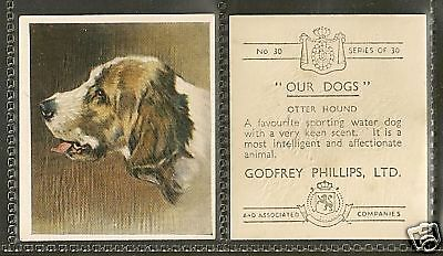 1939 UK Dog Art Portrait Our Dogs Godfrey Phillips Cigarette Card OTTERHOUND