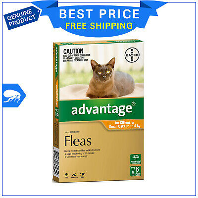 ADVANTAGE for Cats Upto 4 Kg ORANGE Pack 6 Pipettes Flea Treatment by Bayer