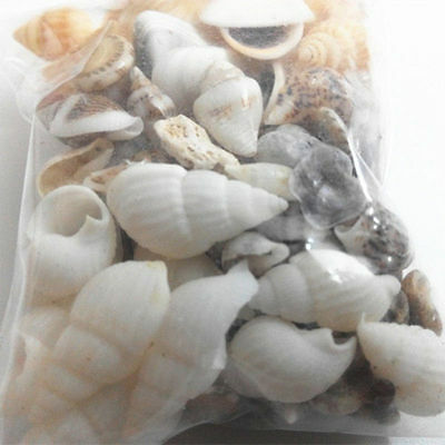 Mixed Sea Shells Beach Mix Shell Decor Wedding Ocean Aquarium NEW