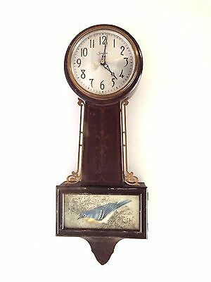 Vintage Sessions Electric Wall Banjo Clock with Bird