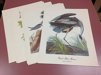 "Audubon Print Lot of 13 prints, 9"" by 12"""